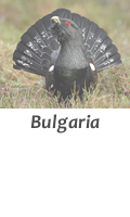 Hunt in Bulgaria with Infocaza