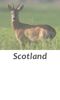 hunt in Scotland with Infocaza