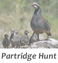 Partrigge hunt in Spain with Infocaza
